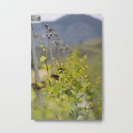 Edna Valley Chardonnay Metal Print