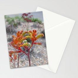 Orange Kangaroo Paw Flowers Stationery Cards