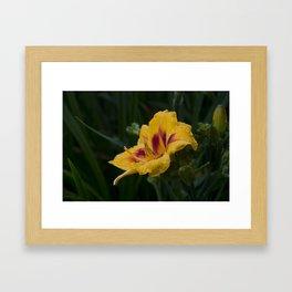 Arachnid on a Wet Flower Framed Art Print