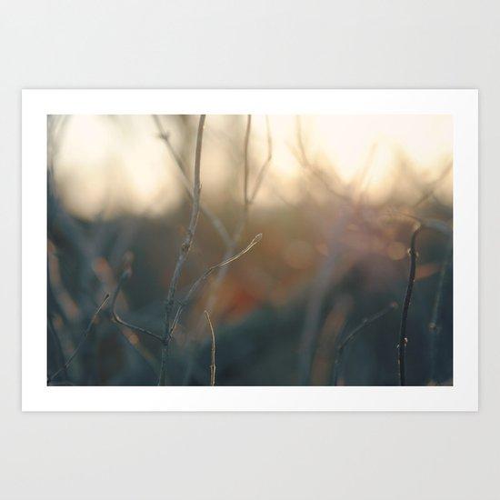 Sunrise in the Woods Art Print