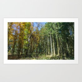 Colorful French forest Art Print