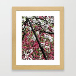 In Full Bloom | Hangzhou, China Framed Art Print