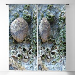 Nacre rock with sea snail Blackout Curtain