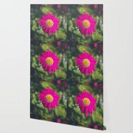 isolated fuchsia gerbera Wallpaper