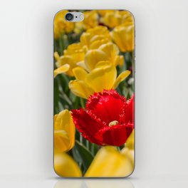 Many yellow tulips and one red iPhone Skin