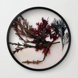 red algae Wall Clock