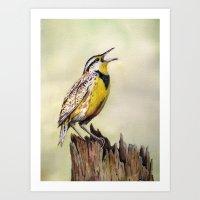 Western Meadowlark Watercolor Print Art Print