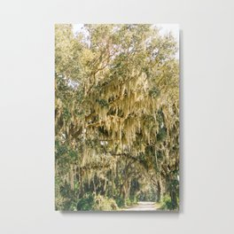 Savannah National Wildlife Refuge III Metal Print