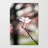 sakura Canvas Prints featuring Sakura by Lara Brambilla