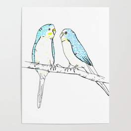 Budgies Poster