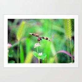 Dragonfly I Art Print