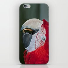 Red and Green Macaw iPhone Skin