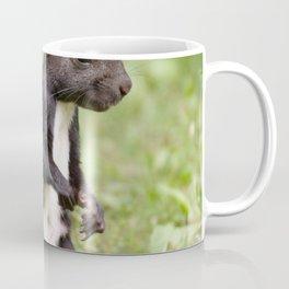 Squirrel Nager Cute Coffee Mug