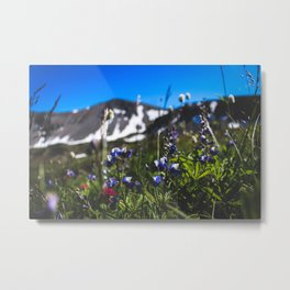 Sunrise Wild Flowers Metal Print