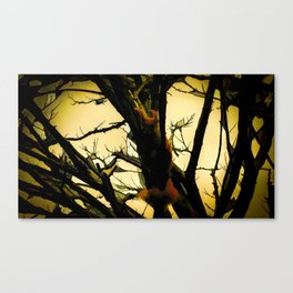 Squirrel in the tree Canvas Print