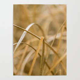 Natural lines Poster