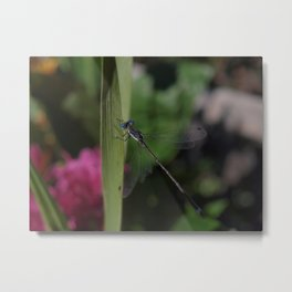 Odonata Takin' a Break Metal Print