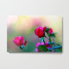 Red Rose Flowers Metal Print