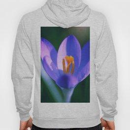 Crocus flowers Hoody