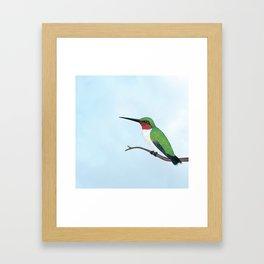 the studious male (ruby-throated hummingbird) Framed Art Print