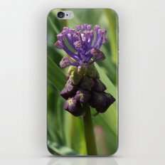 Muscari iPhone & iPod Skin