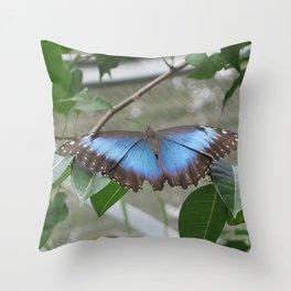 Butterfly gardens 2 Throw Pillow