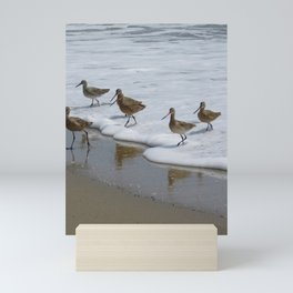 Sandpiper Convention at Malibu Colony Mini Art Print