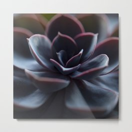 Succulent Plant In Close-up #decor #society6 #homedecor Metal Print