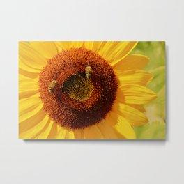 Sunflower macro 209 Metal Print
