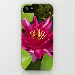 red water lily VI iPhone Case