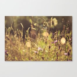 Summer Fields | 01 Canvas Print
