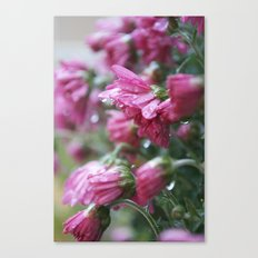 Raindrops on Flowers Canvas Print