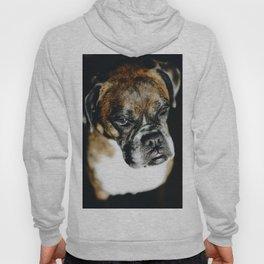 Boxer Dog Hoody
