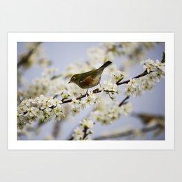 A Bird Perching on a Twig Art Print