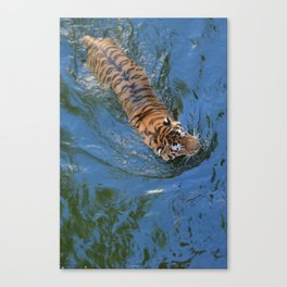 Swimming Tiger Canvas Print
