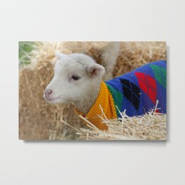 Lamb In from the Cold Metal Print