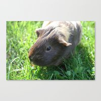 guinea pig Canvas Prints featuring Guinea Pig by Rose&BumbleBee