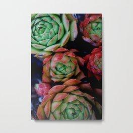 Succulent Plants in the Sun Metal Print