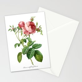 Vintage Rose - Redoute's Rosa Centifolia Foliacea Stationery Cards