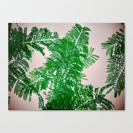 Fern Perspective Canvas Print