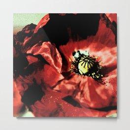 one red poppy Metal Print