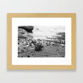 Sea Urchin on an Atlantic Shore Framed Art Print