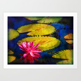 Water Lily 2 Art Print