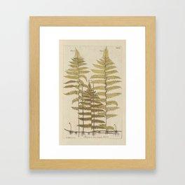 Vintage Fern Botanical Framed Art Print