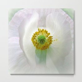 White Arctic Poppy Metal Print