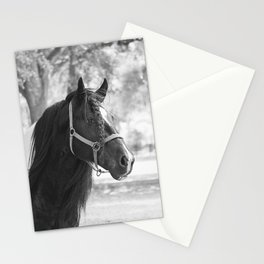 Stunning Gypsy Vanner Stationery Cards
