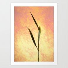 Grass Still Life Art Print