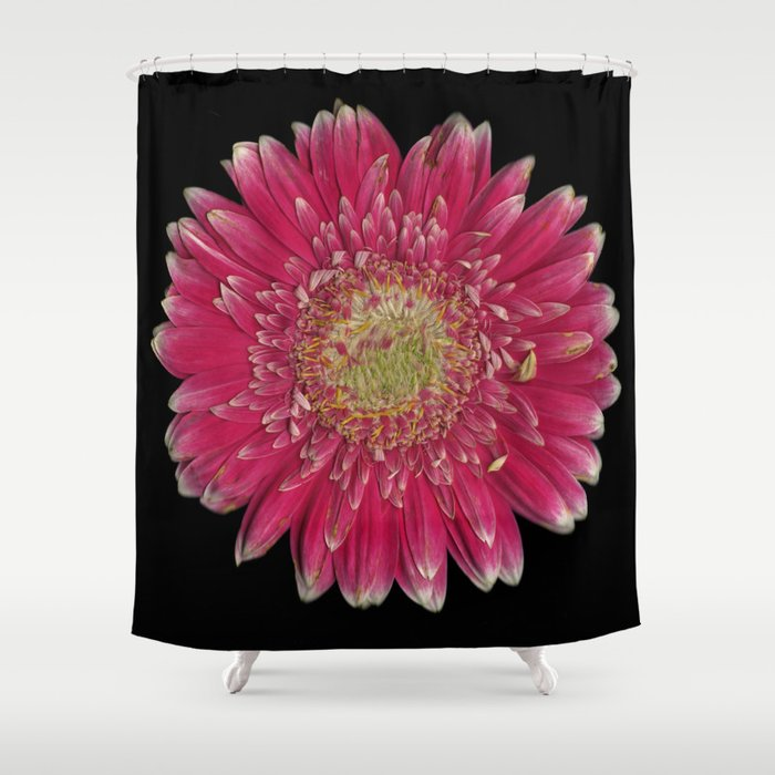 Pink Gerbera Daisy Shower Curtain
