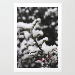 Winter Holly Art Print