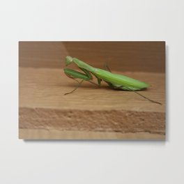 Are you talking to me? Another bug caught on film. Metal Print